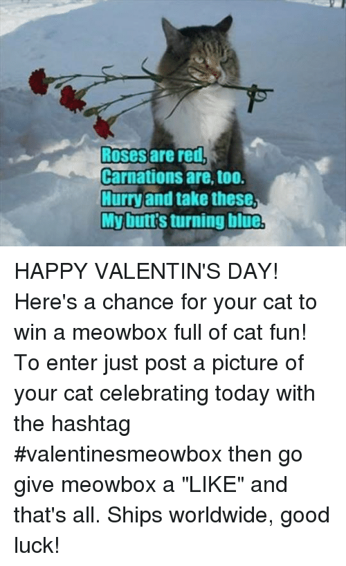 "Memes, 🤖, and Carnation: Roses are red,  Carnations are, too.  Hurry and take these  My buttsturning blue HAPPY VALENTIN'S DAY! Here's a chance for your cat to win a meowbox full of cat fun! To enter just post a picture of your cat celebrating today with the hashtag #valentinesmeowbox then go give meowbox a ""LIKE"" and that's all. Ships worldwide, good luck!"