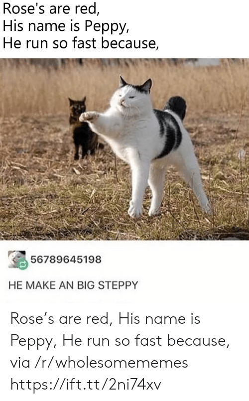 Run, Rose, and Red: Rose's are red  His name is Peppy,  He run so fast because,  56789645198  HE MAKE AN BIG STEPPY Rose's are red, His name is Peppy, He run so fast because, via /r/wholesomememes https://ift.tt/2ni74xv