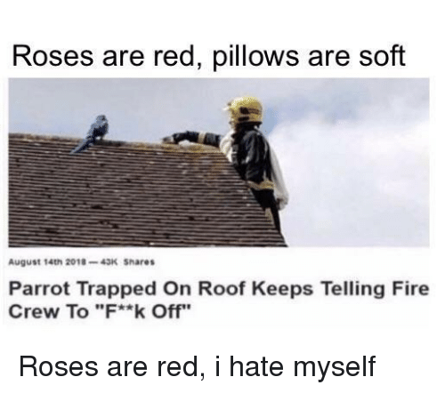 """pillows: Roses are red, pillows are soft  August 14th 2018-43K Shares  Parrot Trapped On Roof Keeps Telling Fire  Crew To """"F**k Off"""" Roses are red, i hate myself"""