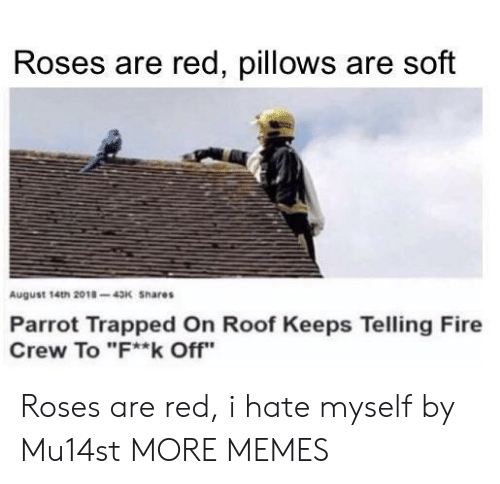 """pillows: Roses are red, pillows are soft  August 14th 2018-43K Shares  Parrot Trapped On Roof Keeps Telling Fire  Crew To """"F**k Off"""" Roses are red, i hate myself by Mu14st MORE MEMES"""