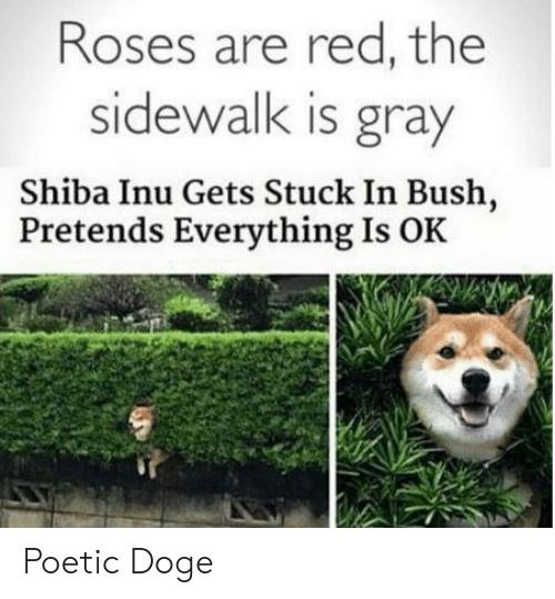 Shiba Inu: Roses are red, the  sidewalk is gray  Shiba Inu Gets Stuck In Bush,  Pretends Everything Is OK   Poetic Doge