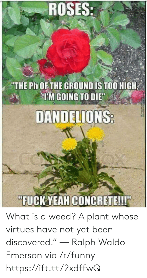 "Funny, Weed, and Yeah: ROSES:  THE Ph OF THE GROUND IS TOO HIGH  IM GOING TO DIE  DANDELIONS  FUCK YEAH CONCRETE!!!"" What is a weed? A plant whose virtues have not yet been discovered."" ― Ralph Waldo Emerson via /r/funny https://ift.tt/2xdffwQ"
