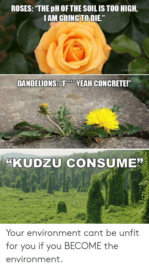"Too High, Com, and Concrete: ROSES: THE pH OF THE SOIL IS TOO HIGH,  IAM GOINGTO DIE.""  EATLIVER.COM  VEAH CONCRETE!  KUDZU CONSUME"" Your environment cant be unfit for you if you BECOME the environment."