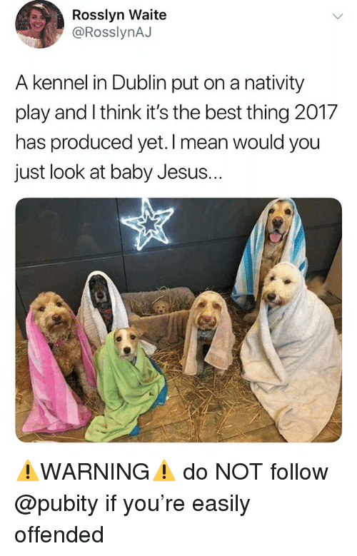 dublin: Rosslyn Waite  @RosslynAJ  A kennel in Dublin put on a nativity  play and I think it's the best thing 2017  has produced yet. I mean would you  just look at baby Jesus.  .. ⚠️WARNING⚠️ do NOT follow @pubity if you're easily offended
