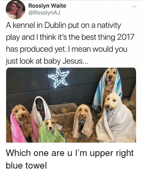Jesus, Memes, and Best: Rosslyn Waite  @RosslynAJ  A kennel in Dublin put on a nativity  play and l think it's the best thing 2017  has produced yet.I mean would you  just look at baby Jesus. Which one are u I'm upper right blue towel