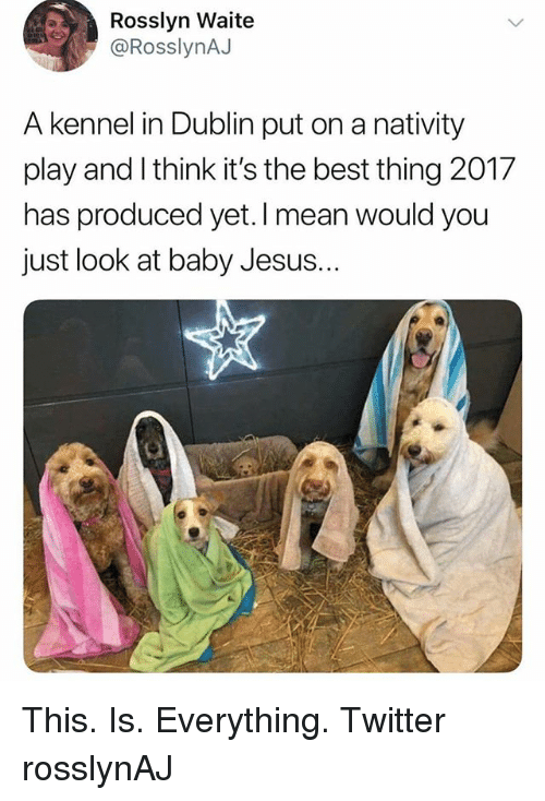 dublin: Rosslyn Waite  @RosslynAJ  A kennel in Dublin put on a nativity  play and I think it's the best thing 2017  has produced yet. I mean would you  just look at baby Jesus. This. Is. Everything. Twitter rosslynAJ