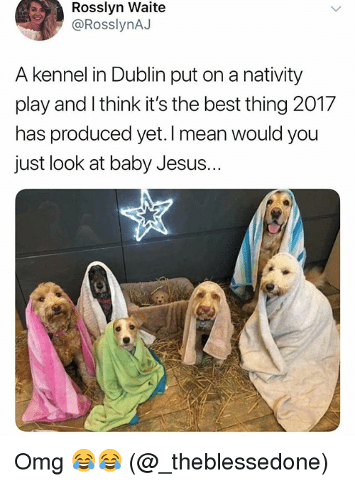 dublin: Rosslyn Waite  @RosslynAJ  A kennel in Dublin put on a nativity  play and I think it's the best thing 2017  has produced yet. I mean  just look at baby Jesus.  would you Omg 😂😂 (@_theblessedone)