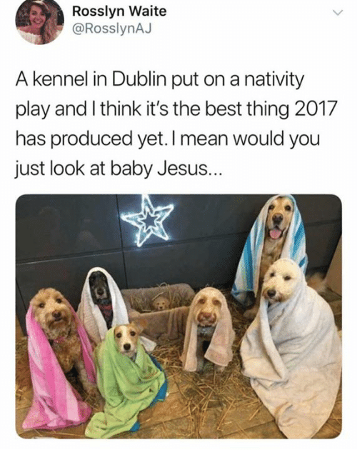 dublin: Rosslyn Waite  @RosslynAJ  A kennel in Dublin put on a nativity  play and I think it's the best thing 2017  has produced yet. I mean would you  just look at baby Jesus.