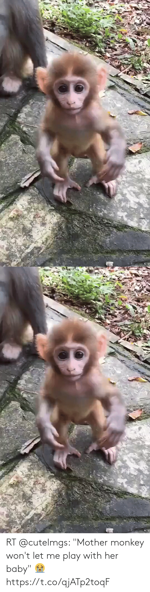 "play: RT @cutelmgs: ""Mother monkey won't let me play with her baby"" 😭 https://t.co/qjATp2toqF"