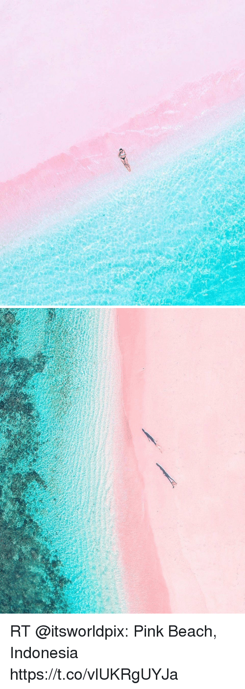 Memes, Beach, and Indonesia: RT @itsworldpix: Pink Beach, Indonesia https://t.co/vlUKRgUYJa