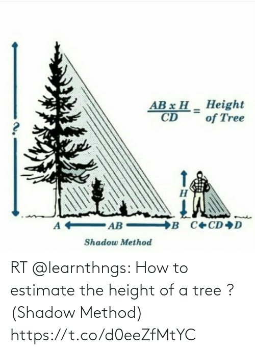 shadow: RT @learnthngs: How to estimate the height of a tree ? (Shadow Method) https://t.co/d0eeZfMtYC