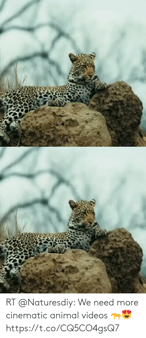 Animal Videos: RT @Naturesdiy: We need more cinematic animal videos 🐆😍 https://t.co/CQ5CO4gsQ7
