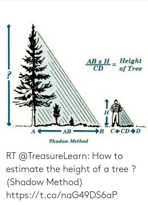 shadow: RT @TreasureLearn: How to estimate the height of a tree ? (Shadow Method) https://t.co/naG49DS6aP