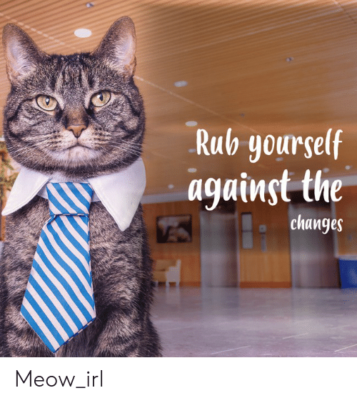 Rub Yourself: Rub yourself  against the  changes Meow_irl