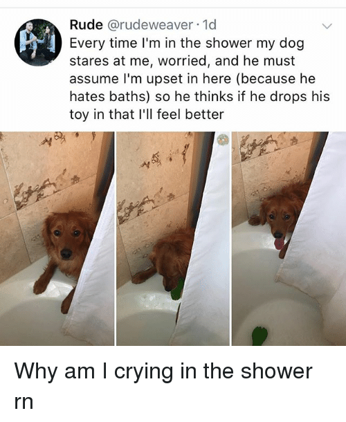 Crying, Memes, and Rude: Rude @rudeweaver 1d  Every time I'm in the shower my dog  stares at me, worried, and he must  assume l'm upset in here (because he  hates baths) so he thinks if he drops his  toy in that I'll feel better  서 Why am I crying in the shower rn