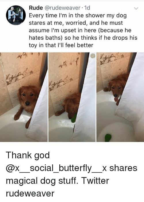 God, Memes, and Rude: Rude @rudeweaver 1d  Every time I'm in the shower my dog  stares at me, worried, and he must  assume l'm upset in here (because he  hates baths) so he thinks if he drops his  toy in that I'll feel better Thank god @x__social_butterfly__x shares magical dog stuff. Twitter rudeweaver