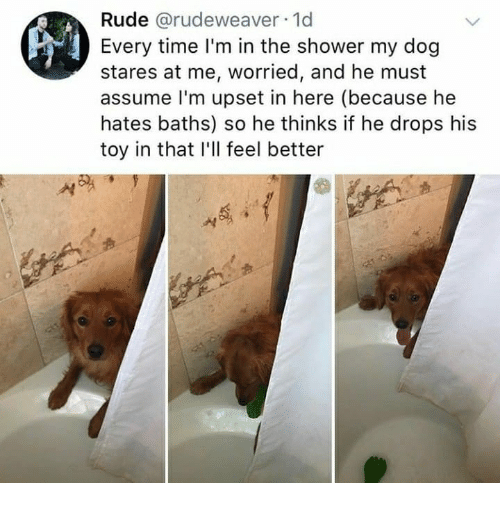 Rude, Shower, and Time: Rude @rudeweaver-1d  Every time I'm in the shower my dog  stares at me, worried, and he must  assume l'm upset in here (because he  hates baths) so he thinks if he drops his  toy in that I'll feel better