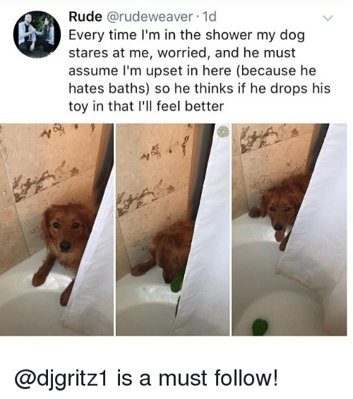Memes, Rude, and Shower: Rude @rudeweaver 1d  Every time l'm in the shower my dog  stares at me, worried, and he must  assume I'm upset in here (because he  hates baths) so he thinks if he drops his  toy in that I'll feel better  서 @djgritz1 is a must follow!