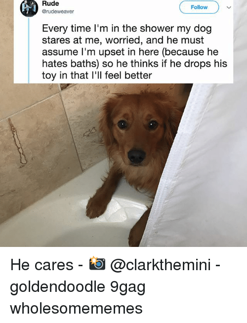 9gag, Memes, and Rude: Rude  @rudeweaver  Follow  Every time I'm in the shower my dog  stares at me, worried, and he must  assume l'm upset in here (because he  hates baths) so he thinks if he drops his  toy in that l'll feel better He cares - 📸 @clarkthemini - goldendoodle 9gag wholesomememes