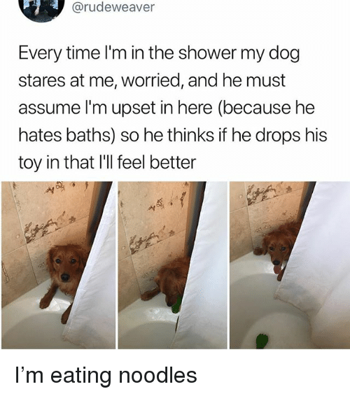 Memes, Shower, and Time: @rudeweaver  Every time l'm in the shower my dog  stares at me, worried, and he must  assume l'm upset in here (because he  hates baths) so he thinks if he drops his  toy in that l'Il feel better I'm eating noodles