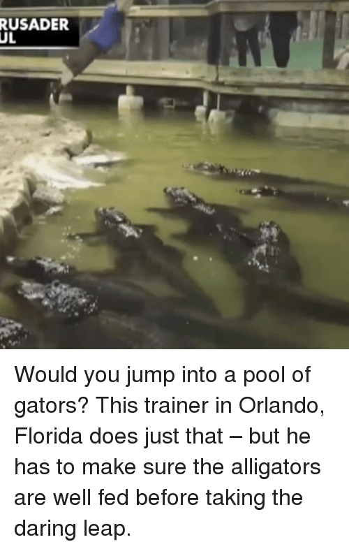 Memes, Florida, and Orlando: RUSADER  UL Would you jump into a pool of gators? This trainer in Orlando, Florida does just that – but he has to make sure the alligators are well fed before taking the daring leap.