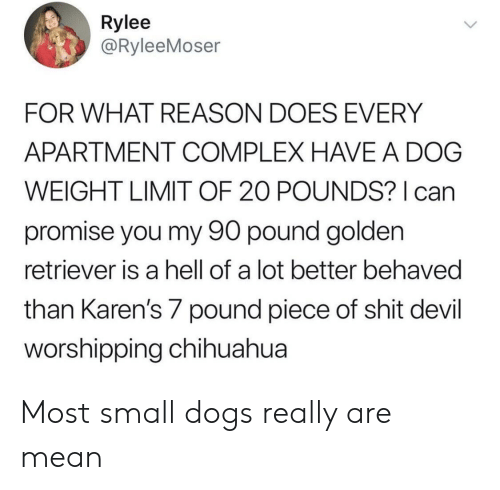 Chihuahua, Complex, and Dogs: Rylee  @RyleeMoser  FOR WHAT REASON DOES EVERY  APARTMENT COMPLEX HAVE A DOG  WEIGHT LIMIT OF 20 POUNDS? can  promise you my 90 pound golden  retriever is a hell of a lot better behaved  than Karen's 7 pound piece of shit devil  orshipping chihuahua Most small dogs really are mean