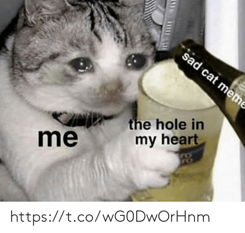 cat meme: sad cat meme  the hole in  my heart  me https://t.co/wG0DwOrHnm