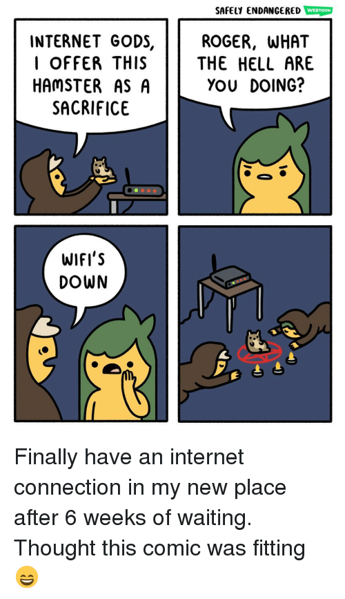 Internet, Memes, and Roger: SAFELY ENDANCERED WEBTOON  INTERNET GODS,  l OFFER THIS  HAMSTER AS A  SACRIFICE  ROGER, WHAT  THE HELL ARE  YOU DOING?  WIFI'S  DOWN Finally have an internet connection in my new place after 6 weeks of waiting. Thought this comic was fitting 😄
