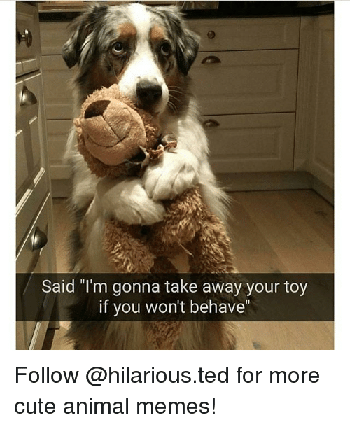 "Cute Animals, Memes, and Ted: Said ""I'm gonna take away your toy  if you won't behave Follow @hilarious.ted for more cute animal memes!"