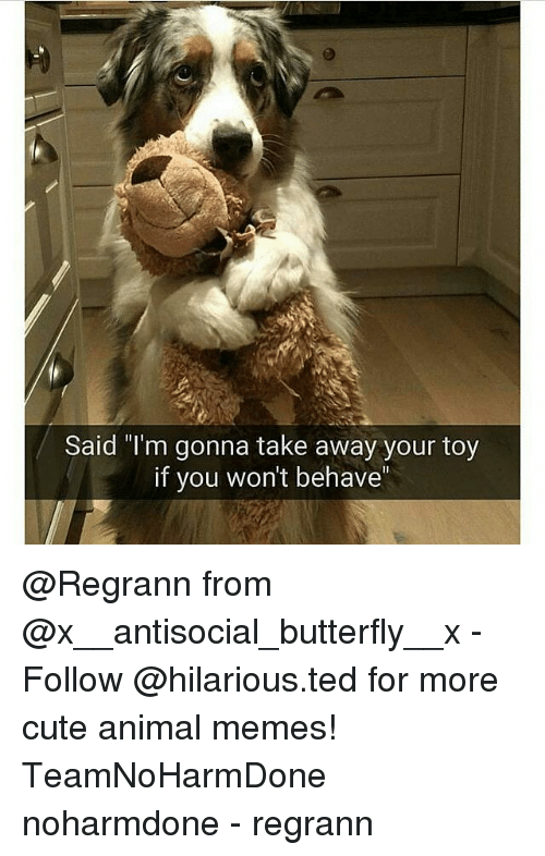 "Animals Meme: Said ""I'm gonna take away your toy  if you won't behave @Regrann from @x__antisocial_butterfly__x - Follow @hilarious.ted for more cute animal memes! TeamNoHarmDone noharmdone - regrann"