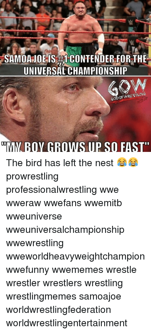 """nesting: SAMOA JOE IS CONTENDER FOR THE  UNIVERSAL CHAMPIONSHIP  MY BOY GROWS UP SO FAST"""" The bird has left the nest 😂😂 prowrestling professionalwrestling wwe wweraw wwefans wwemitb wweuniverse wweuniversalchampionship wwewrestling wweworldheavyweightchampion wwefunny wwememes wrestle wrestler wrestlers wrestling wrestlingmemes samoajoe worldwrestlingfederation worldwrestlingentertainment"""
