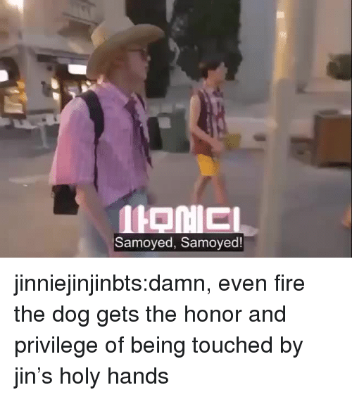 Fire, Tumblr, and Blog: Samoyed, Samoyed! jinniejinjinbts:damn, even fire the dog gets the honor and privilege of being touched by jin's holy hands