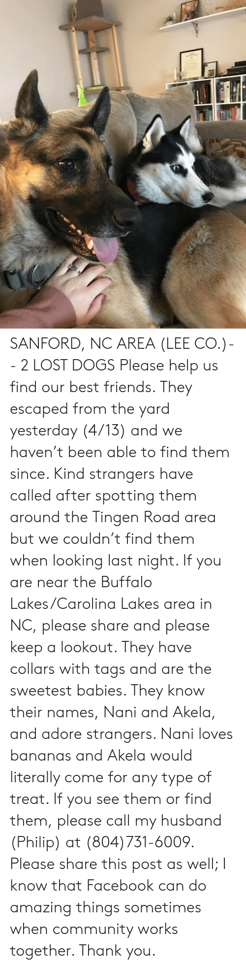 Community, Dogs, and Facebook: SANFORD, NC AREA (LEE CO.)-- 2 LOST DOGS  Please help us find our best friends. They escaped from the yard yesterday (4/13) and we haven't been able to find them since. Kind strangers have called after spotting them around the Tingen Road area but we couldn't find them when looking last night.  If you are near the Buffalo Lakes/Carolina Lakes area in NC, please share and please keep a lookout. They have collars with tags and are the sweetest babies. They know their names, Nani and Akela, and adore strangers. Nani loves bananas and Akela would literally come for any type of treat.   If you see them or find them, please call my husband (Philip) at (804)731-6009. Please share this post as well; I know that Facebook can do amazing things sometimes when community works together. Thank you.