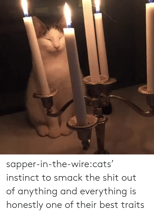 Cats, Shit, and Target: sapper-in-the-wire:cats' instinct to smack the shit out of anything and everything is honestly one of their best traits