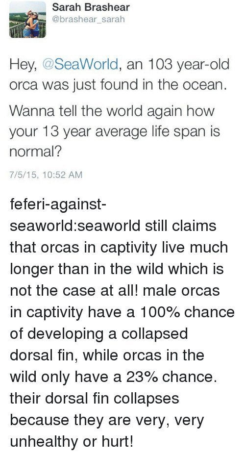 Anaconda, Life, and Orcas: Sarah Brashear  @brashear_sarah  Hey, @SeaWorld, an 103 year-old  orca was just found in the ocean  Wanna tell the world again how  your 13 year average life span is  normal?  7/5/15, 10:52 AM feferi-against-seaworld:seaworld still claims that orcas in captivity live much longer than in the wild which is not the case at all! male orcas in captivity have a 100% chance of developing a collapsed dorsal fin, while orcas in the wild only have a 23% chance. their dorsal fin collapses because they are very, very unhealthy or hurt!
