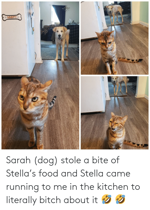 To Me: Sarah (dog) stole a bite of Stella's food and Stella came running to me in the kitchen to literally bitch about it 🤣 🤣