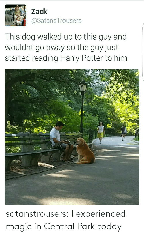 Magic: satanstrousers: I experienced magic in Central Park today