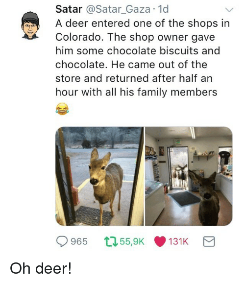Deer, Family, and Chocolate: Satar @Satar_Gaza 1d  A deer entered one of the shops in  Colorado. The shop owner gave  him some chocolate biscuits and  chocolate. He came out of the  store and returned after half arn  hour with all his family members  965 55,9K131K <p>Oh deer!</p>