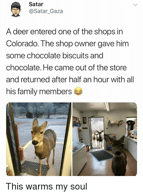 Deer, Family, and Funny: Satar  @Satar Gaza  A deer entered one of the shops in  Colorado. The shop owner gave him  some chocolate biscuits and  chocolate. He came out of the store  and returned after half an hour with all  his family members This warms my soul