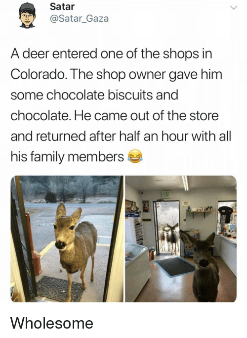 Deer, Family, and Chocolate: Satar  @Satar_Gaza  A deer entered one of the shops in  Colorado. The shop owner gave him  some chocolate biscuits and  chocolate. He came out of the store  and returned after half an hour with all  his family members <p>Wholesome</p>