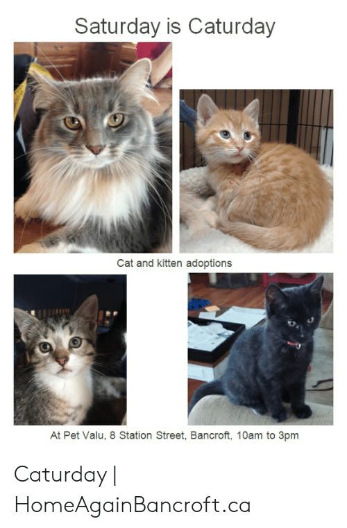 Caturday Cat: Saturday is Caturday  Cat and kitten adoptions  At Pet Valu, 8 Station Street, Bancroft, 10am to 3pm Caturday | HomeAgainBancroft.ca