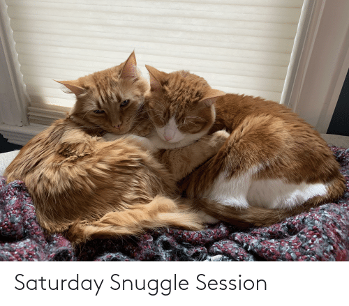 Aww Memes: Saturday Snuggle Session