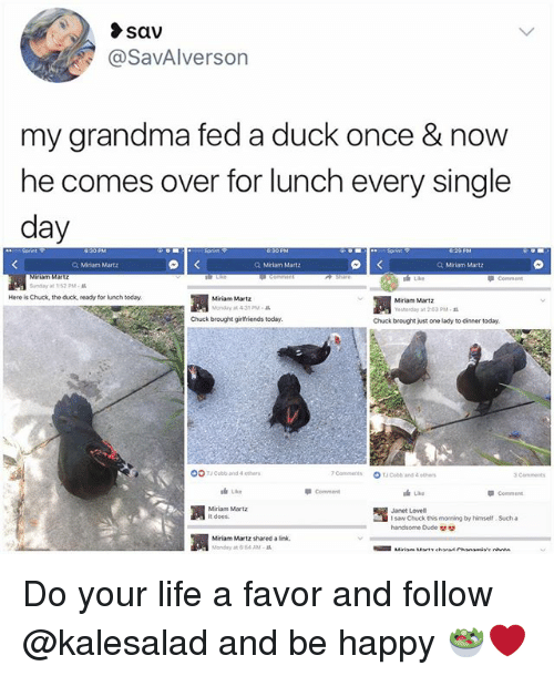 Duded: sav  @SavAlverson  my grandma fed a duck once & now  he comes over for lunch every single  day  Q, Miriam Martz  Q Miriam Matz  Q Miriam Martz  S Like  Snay at 1:52 PM .  Here is Chuck, the duck, ready for lunch today  Miriam Martz  Monday at 4:35 PM  Miriam Martz  Yesherday at 2 03 PM-  Chuck brought girlfriends today  Chuck brought just one lady to dinner today.  OOTCobb and 4 othe  7cam merits  OT」Cobb and 4 eows  3Commets  油Like  Commen  Comment  Miriam Martz  it does.  15  houck this moming by hime. Sucha  Janet Lovell  handsome Dude  凋  Miriam Martz shared a link,  Monday at 6:54 AM . Do your life a favor and follow @kalesalad and be happy 🥗❤️