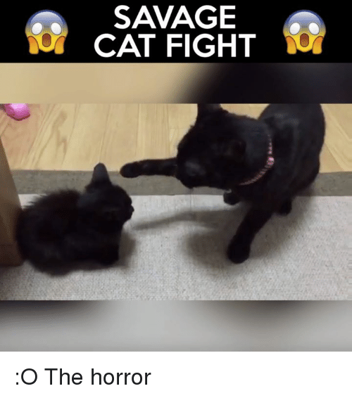 cat fighting: SAVAGE  CAT FIGHT :O  The horror