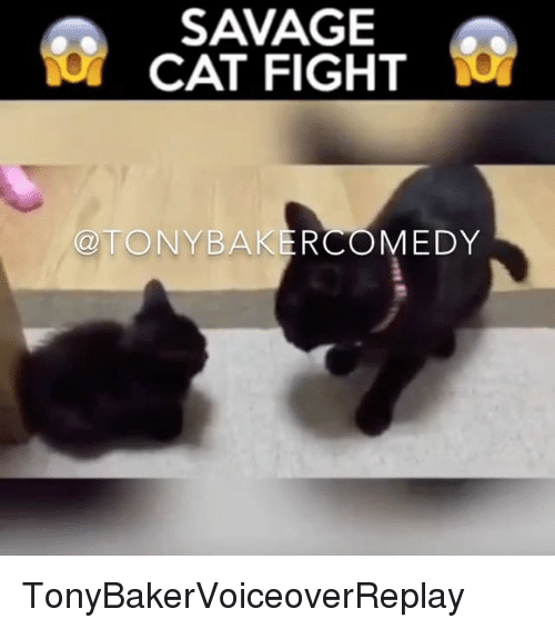 cat fight: SAVAGE  CAT FIGHT  TONY BAKERCOMEDY TonyBakerVoiceoverReplay