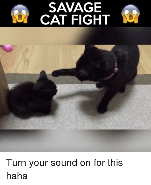 cat fight: SAVAGE  CAT FIGHT Turn your sound on for this haha