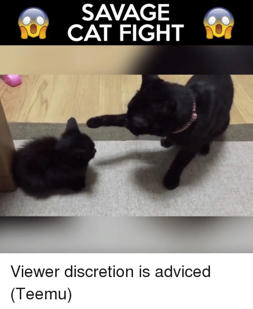 cat fight: SAVAGE  CAT FIGHT Viewer discretion is adviced (Teemu)