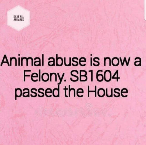 Animals, Memes, and Animal: SAVE ALL  ANIMALS  Animal abuse is now a  Felony. SB1604  passed the House