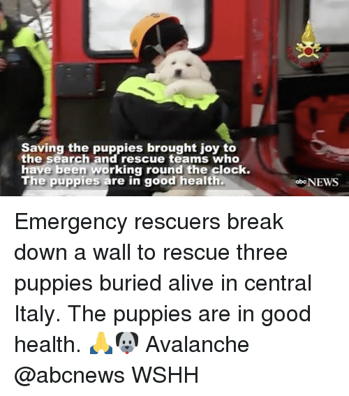 Clock, Memes, and Italy: Saving the puppies brought joy to  the search and rescue teams who  have been working round the clock.  The puppies are in good health.  oboNEWS Emergency rescuers break down a wall to rescue three puppies buried alive in central Italy. The puppies are in good health. 🙏🐶 Avalanche @abcnews WSHH