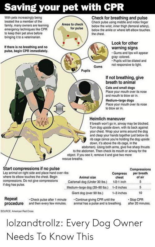 Dog Has: Saving your pet with CPR  Check for breathing and pulse  Check pulse using middle and index finger  below the wrist, inner thigh (temoral artery).  below the ankle or where left elbow touches  With pets increasingly being  treated like a member of the  Areas to check  family, many owners are learning  emergency techniques like CPR  to keep their pet alive before  bringing it to a veterinarian.  for pulse  the chest  Look for other  warning signs  Gums and lips will appear  gray- colored.  Pupils will be dilated and  not responsive to light  If there is no breathing and no  pulse, begin CPR immediately.  Gums  Pupils  If not breathing, give  breath to animal  Cats and small dogs  Place your mouth over its nose  and mouth to blow air in.  Medium-large dogs  Place your mouth over its nose  to blow air in  Heimlich maneuver  If breath won't go in, airway may be blocked.  Turn dog upside down, with its back against  your chest. Wrap your arms around the dog  and clasp your hands together just below its  rib cage (since you're holding the dog upside  down, it's above the rib cage, in the  abdomen). Using both arms, give five sharp thrusts  to the abdomen. Then check its mouth or airway for the  object. If you see it, remove it and give two more  rescue breaths  Start compressions if no pulse  Lay animal on right side and place hand over ribs  where its elbow touches the chest. Begin  compressions. Do not give compressions  if dog has pulse.  Compressions  per breath  of air  Compress  chest  Animal size  Catsmall dog (Under 30 lbs.)  5  1/2-1 inch  Medium-large dog (30-90 lbs.)  1-3 inches  5  Giant dog (over 90 lbs.)  1-3 inches  10  Repeat  procedure  Stop CPR  after 20 minutes.  Check pulse after 1 minute  and then every few minutes.  Continue giving CPR until the  animal has a puise and is breathing.  soURCE  American Red Cross lolzandtrollz:  Every Dog Owner Needs To Know This